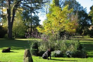 Dog friendly hotel Dorset